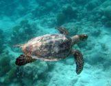 Chagos Bay